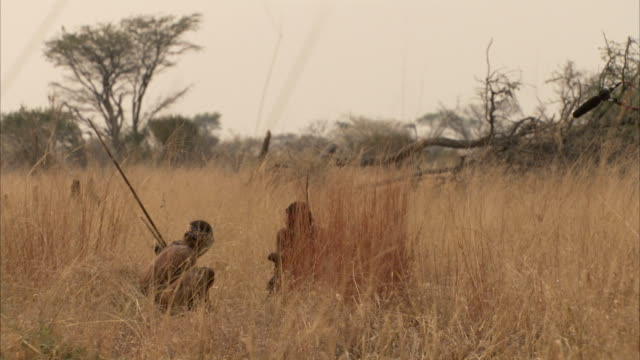 Two men crouch in long grass on the Namibian plains. Available in HD