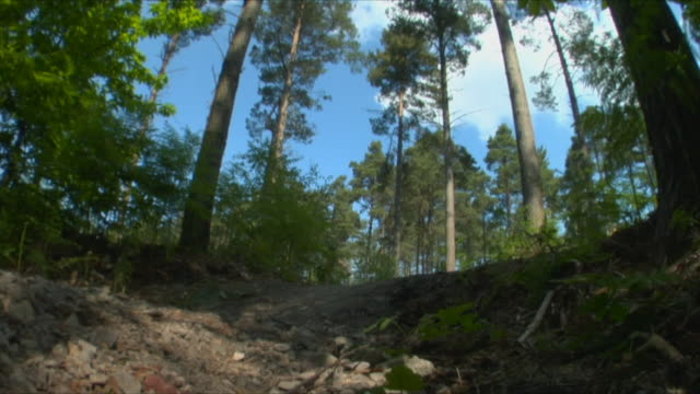 slo mo la ws two men cycling through bedgebury forest / kent, england, uk - see other clips from this shoot 1036 stock videos and b-roll footage