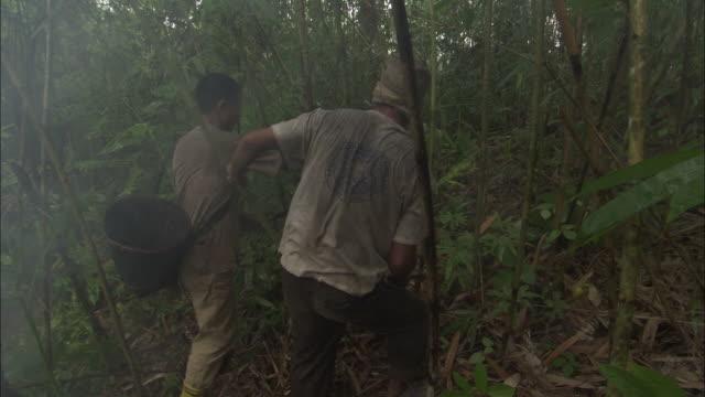 vídeos de stock e filmes b-roll de two men hack down bamboo plants in a forest. - bambu material