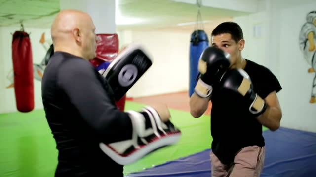 two men having boxing workout indoors - boxer dog stock videos and b-roll footage