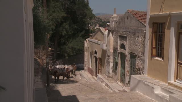 stockvideo's en b-roll-footage met two men herd donkeys at symi town. - werkdier