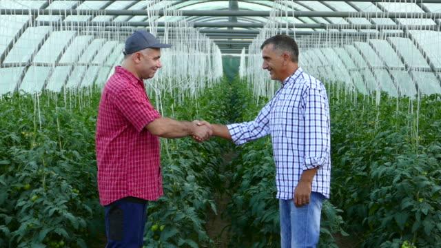 vídeos y material grabado en eventos de stock de dos hombres en el apretón de manos en invernadero - oficio agrícola