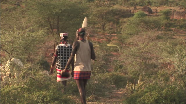 two men in tribal dress walk through a field toward a white bull. - bull animal stock videos & royalty-free footage