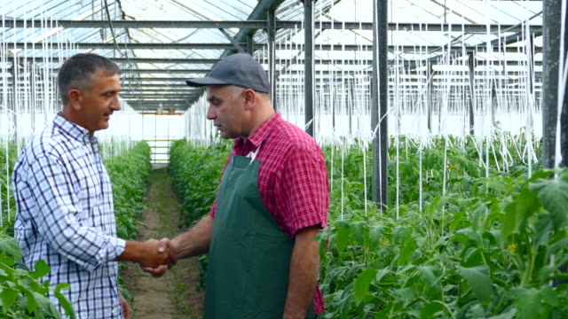 4K Two men making agreement in greenhouse