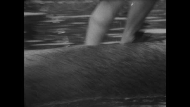 two men on one log rolling it in the water as people watch / one man loses footing and falls in the water / both men fall in at the same time / happy... - 巻く点の映像素材/bロール