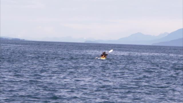 vídeos y material grabado en eventos de stock de two men paddle a kayak near breaching whales. - cetáceo