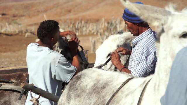 ms two men putting saddle on mule / bergsig, kunene, namibia - saddle stock videos & royalty-free footage