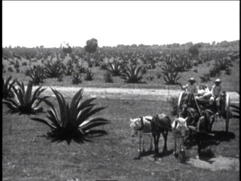 vídeos de stock, filmes e b-roll de 1930 ts two men riding horse drawn carriage around palms with sugarcane in back / mexico city, mexico - 1930