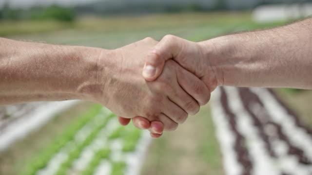 vidéos et rushes de deux hommes se serrant la main sur le terrain de la laitue - partenariat