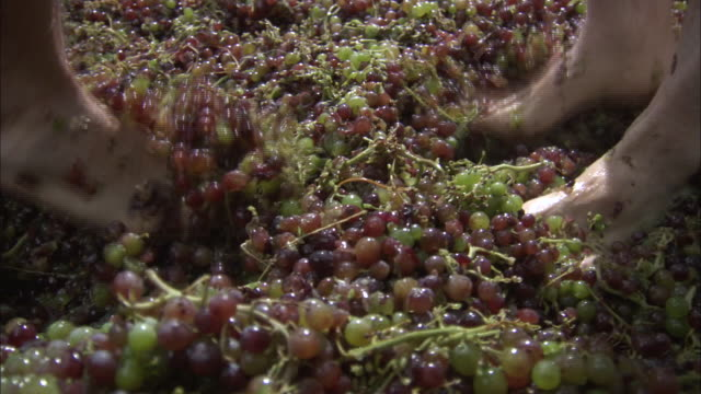 cu two men stomping grapes with bare feet / crete, greece - grape stock videos & royalty-free footage