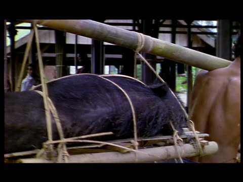 two men use a sway pole to carry a hog tied to a pallet. - schwein stock-videos und b-roll-filmmaterial