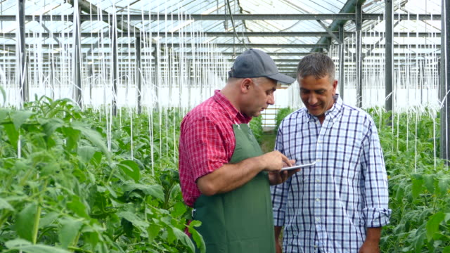 two men using digital tablet in greenhouse - greenhouse stock videos & royalty-free footage