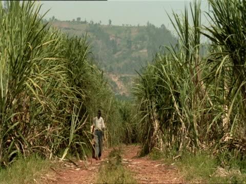 ws two men walking down path between sugar cane field / kigali, rwanda - フツ族点の映像素材/bロール