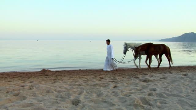 vídeos y material grabado en eventos de stock de ws two men walking with horses on beach, dahab, sinai, egypt - cuatro animales