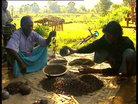 two men weigh out dried berries at a village market in a tribal area of india. - indigenous culture stock videos & royalty-free footage