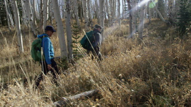 two middle-aged caucasian men hike together on a dirt path through a forest of aspen trees on a clear, sunny day - aspen tree stock videos & royalty-free footage