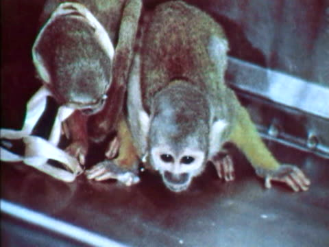 two monkeys in a lab - scientific experiment stock videos & royalty-free footage