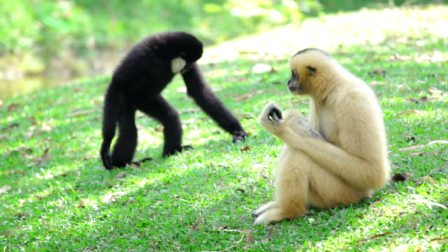 two monkeys sitting in the grass - animal family stock videos & royalty-free footage