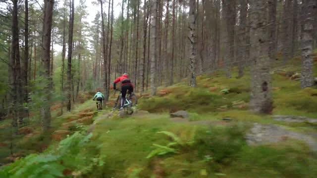 two mountain bikers cycling along forest bike trail - mountain biking stock videos & royalty-free footage