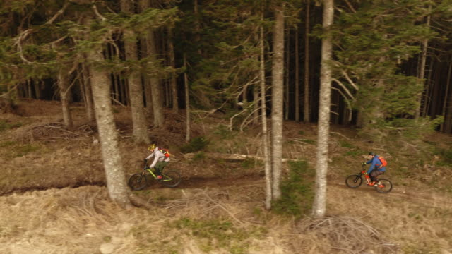 AERIAL Two mountain bikers riding up the forest trail