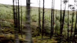 Two mountain bikers speeding along a forest bike trail