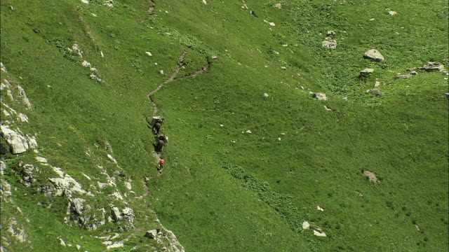 vidéos et rushes de aerial zo two mules and farmer climbing up hill side, near engleberg, bern, switzerland - animaux au travail