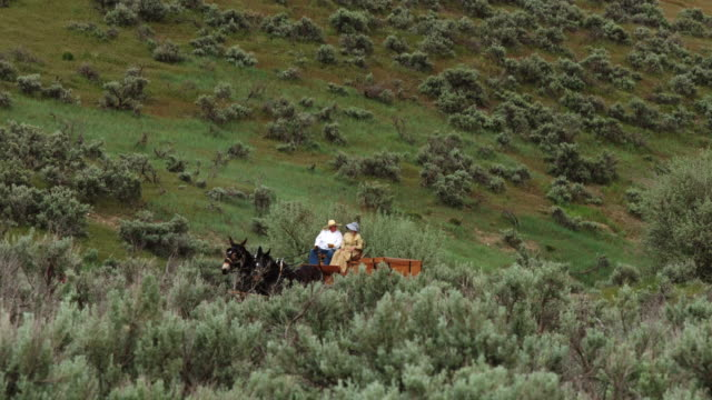 Two Mules Pulling Cart