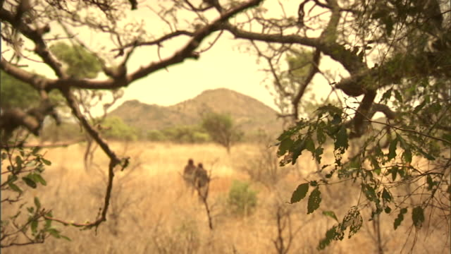 two neanderthals walk into a clearing in the great rift valley. - historische szene stock-videos und b-roll-filmmaterial