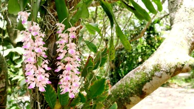 vídeos y material grabado en eventos de stock de dos orquídeas flores en ultra hd - raíz