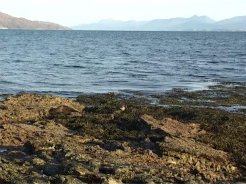two otters settling down for rest - europeisk utter bildbanksvideor och videomaterial från bakom kulisserna