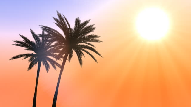 two palm trees silhouette loopable - two objects stock videos & royalty-free footage