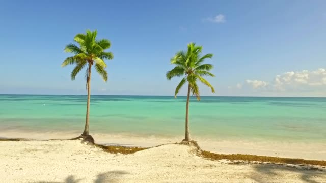 two palm trees - wide stock videos & royalty-free footage