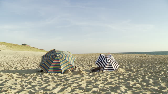 ws two parasols on beach in wind / cap de l'homy, aquitaine, france - mittelgroße tiergruppe stock-videos und b-roll-filmmaterial