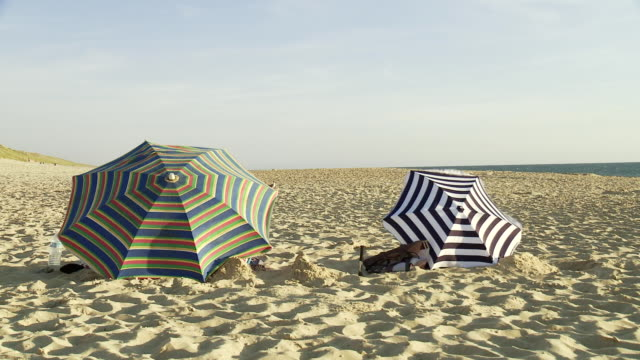 ms two parasols on beach in wind / cap de l'homy, aquitaine, france - medium group of animals stock videos & royalty-free footage