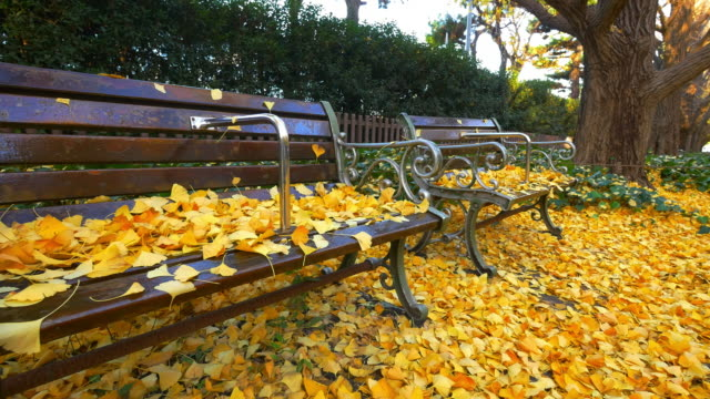 two park bench and ginkgo tree moving slider shot at jingu gaien - bench stock videos & royalty-free footage