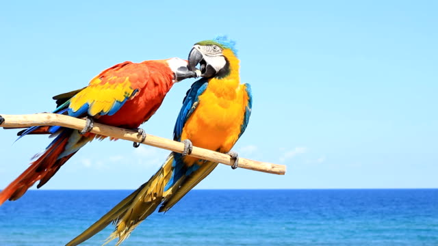 two parrots - birds in love - two animals stock videos and b-roll footage