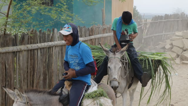 two peruvian farmers listen to a portable radio while riding donkeys carrying the harvest - esel stock-videos und b-roll-filmmaterial