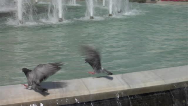 two pigeons land on a fountain - 2匹点の映像素材/bロール