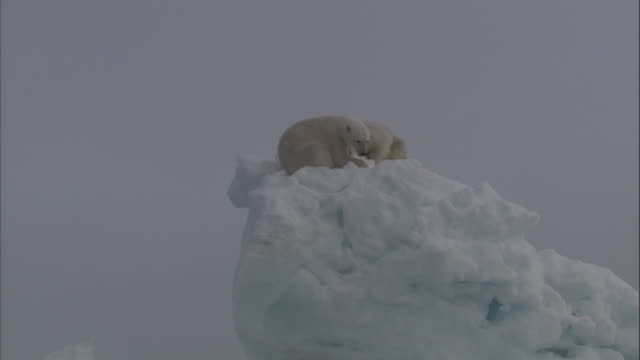 two polar bears rest on top of an iceberg in svalbard, norway. - stranded stock videos and b-roll footage