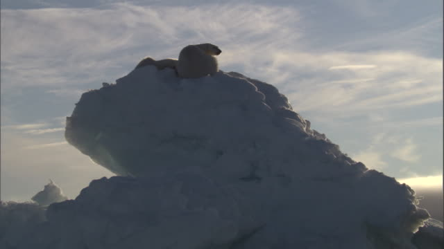 two polar bears rest on top of an iceberg in svalbard, norway. - ホッキョクグマ点の映像素材/bロール