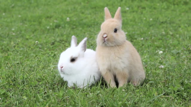 vidéos et rushes de two rabbits sitting on grass - lapin
