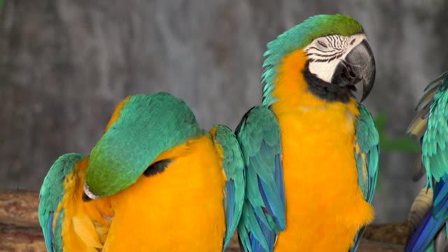 zwei rote papagei ara - tierkörper stock-videos und b-roll-filmmaterial
