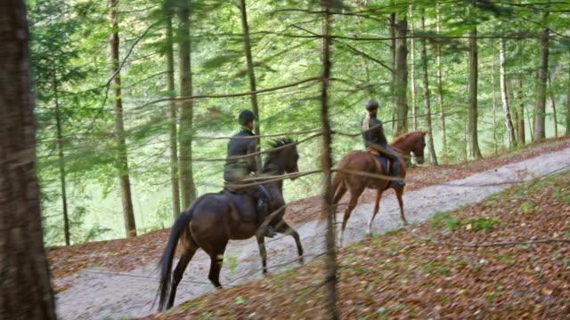 vídeos de stock, filmes e b-roll de ds dois cavaleiros que montam cavalos trote na floresta - montar um animal