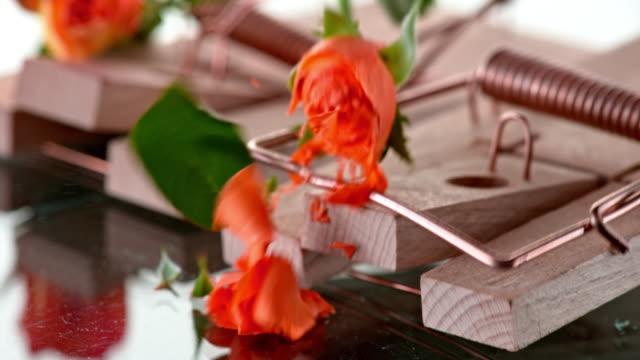 vídeos de stock, filmes e b-roll de slo mo ld duas rosas caindo em duas armadilhas de rato - quatro objetos