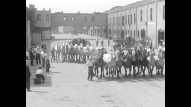 vídeos y material grabado en eventos de stock de two rows of horses are led on street between two buildings / several horses are displayed in front of auctioneer on elevated stage / card buyers test... - suspenders