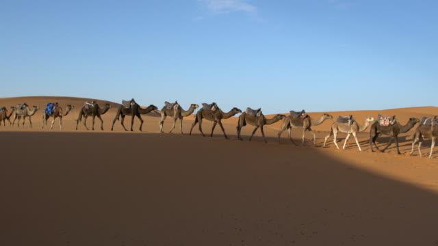 two sahara camel caravans among the dunes of erg chebbi, saharan morocco - dramatic landscape stock videos and b-roll footage