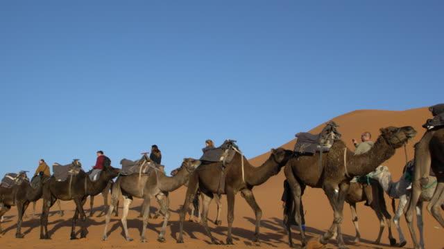 Two Sahara camel caravans among the dunes of Erg Chebbi, Saharan Morocco