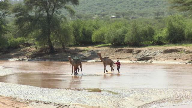 WS PAN Two Samburu tribesmen with camels crossing river / Samburu Game Reserve, Kenya