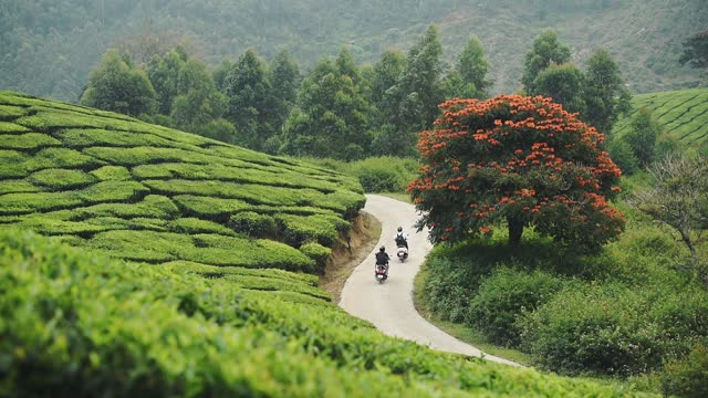 two scooters on a road next to a tulip tree, surrounded by tea plantations, in munnar, india - hill stock videos & royalty-free footage