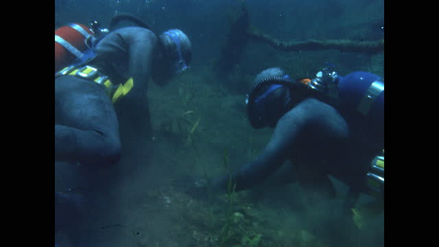 two scuba divers collect seaweed together from a shallow lakebed - aqualung diving equipment stock videos & royalty-free footage